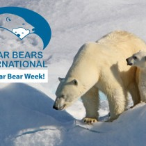 International Polar Bear Week