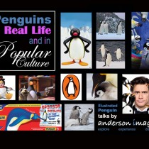 Penguins Are In Fashion This Xmas