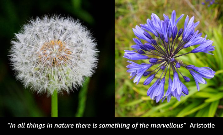 """In all things in nature there is something of the marvellous"""