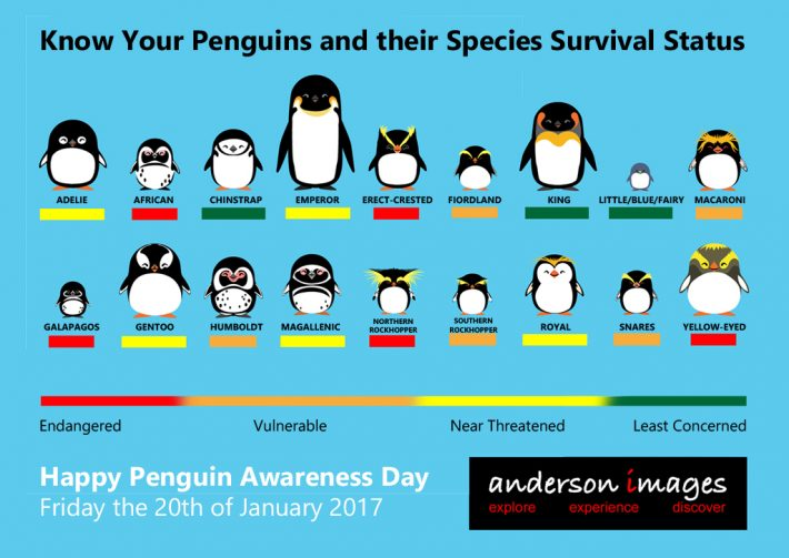 Penguin Awareness Day 2017